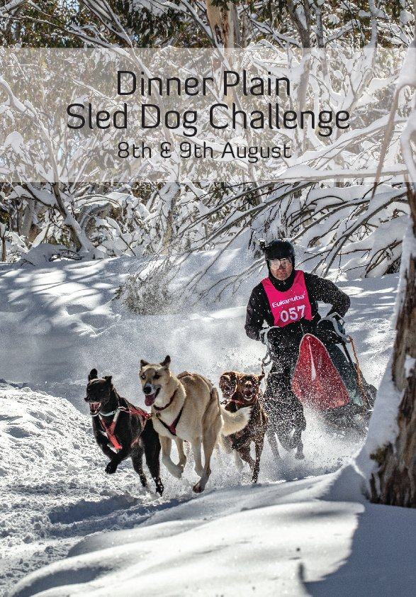 Dinner Plain Sled Dog Challenge