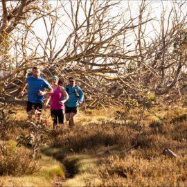 Trail Running in Dinner Plain
